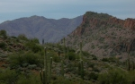 desert ridge andsaguaros