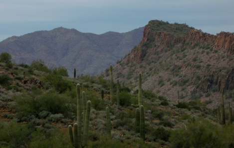 desert ridge and saguaros