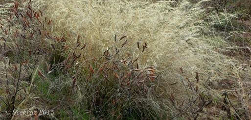 Desert seed pods and wild grasses