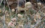Dried delicate desert wildflowerstoo