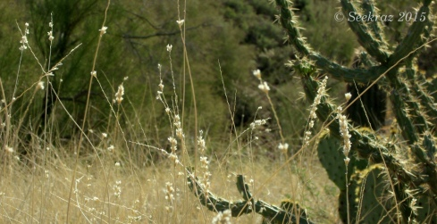 Dried desert wild-flowers and cacti