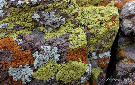 Lichen on desert rocks