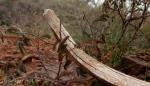 Rib bone and spider webs on desertfloor