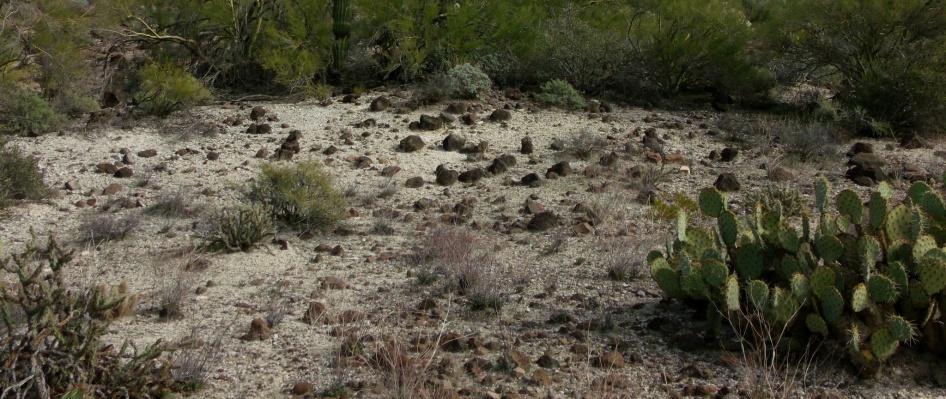 white desert floor