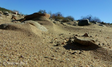 Agua Fria River sandy bed