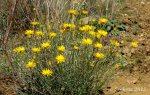 Cluster of yellowwildflowers