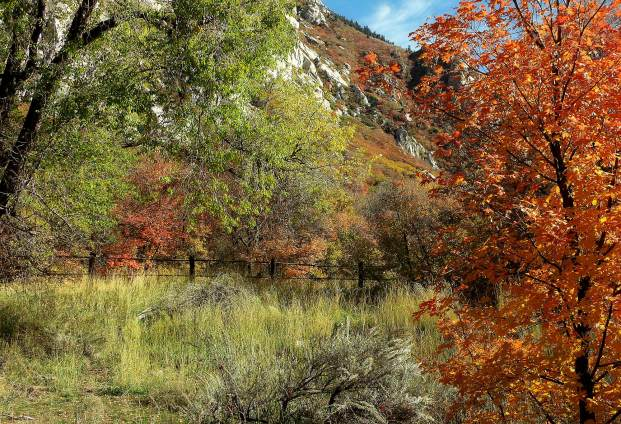 Another Fall in the Wasatch Mountains, Little Cottonwood Canyon