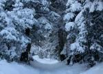 Entering Narnia through Little CottonwoodCanyon