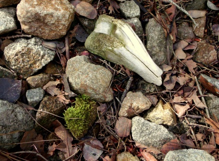 Evidence of life in Little Cottonwood Canyon