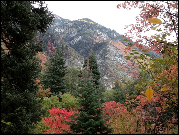 Fall colors in Little Cottonwood Canyon of the Wasatch Mountains