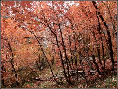 Fall is here again in Little Cottonwood Canyon