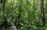 Forest of Little CottonwoodCanyon