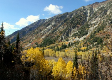 Golden Aspen in Little Cottonwood Canyon