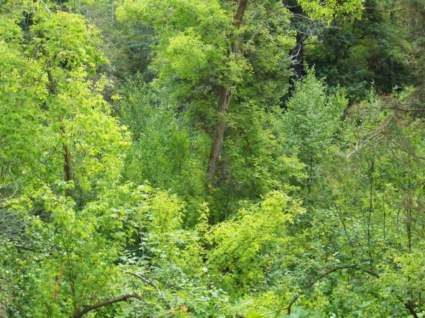 Green Forest in Little Cottonwood Canyon, August 18, 2010