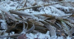 Ice crystals on winter-brown grass in Little CottonwoodCanyon