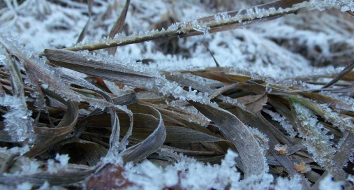 Ice crystals on winter-brown grass in Little Cottonwood Canyon