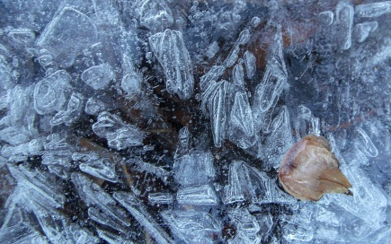 Surface ice formations in Little Cottonwood Canyon stream