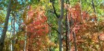 Mix of Fall colors in Little CottonwoodCanyon