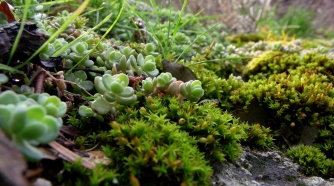 Mossy life on a rock in Little Cottonwood Canyon