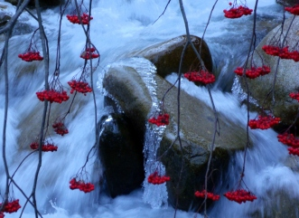 Mountain Ash berries and ice-art on rock in Little Cottonwood Canyon stream