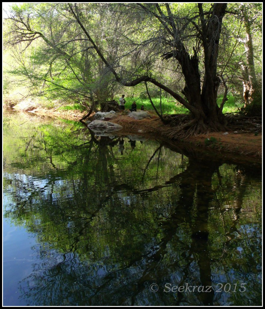 Sycamore Canyon Creek with reflections