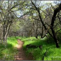 Morning on Parson's Trail...in Sycamore Canyon