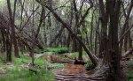 Sycamore Canyon greeningtrees