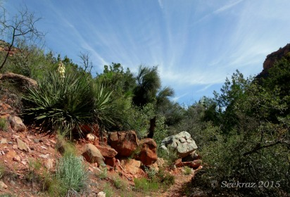 Sycamore Canyon with blooming Yucca and cloud-streaked sky