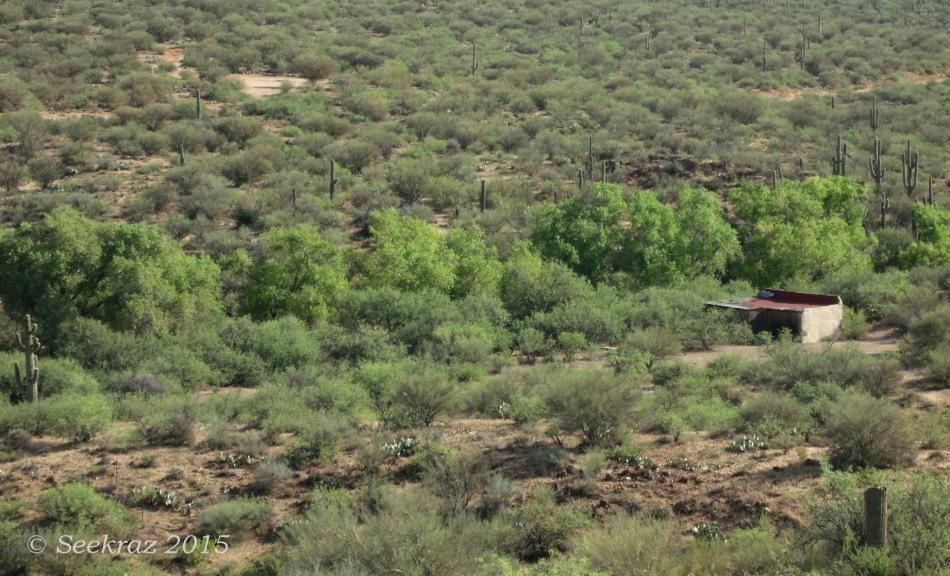 Riparian Greenbelt of Sheep Gulch