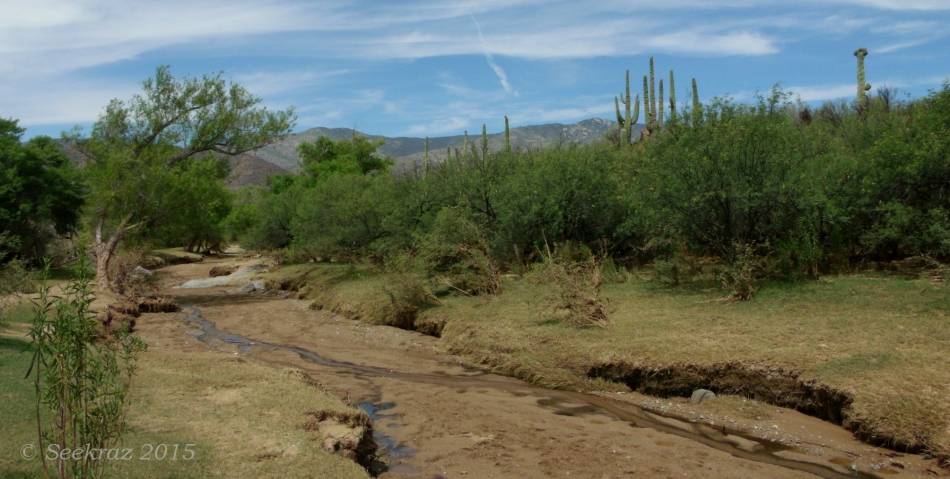 Sheep Gulch streambed 5