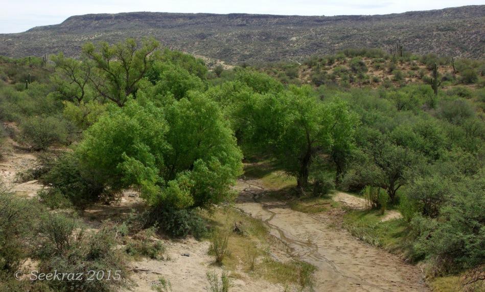 Sheep Gulch streambed with desert panorama