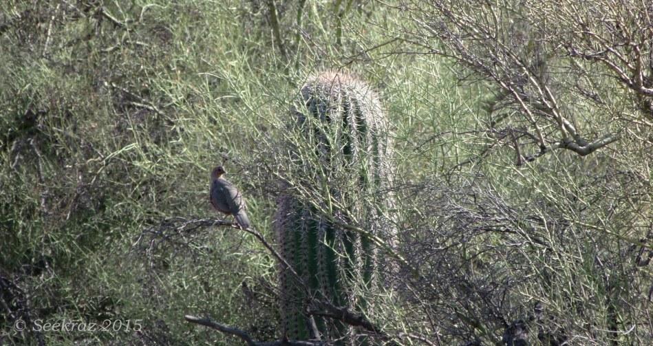 Wildlife of Black Canyon Trail