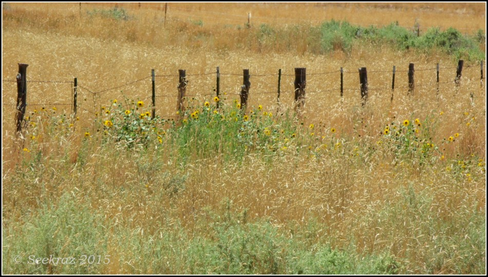 Highway 89 fence-line with wildflowers