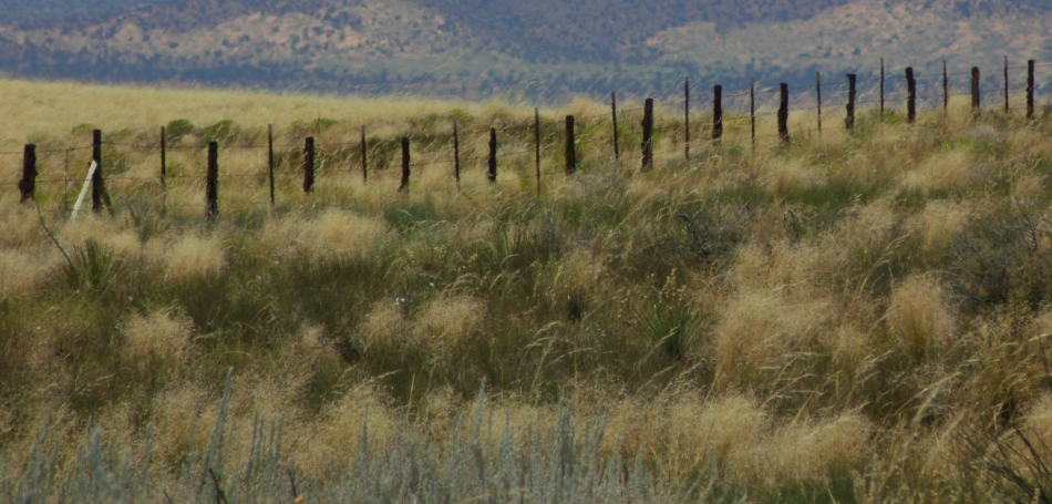 Fence posts among wild grass, north of Page, Arizona