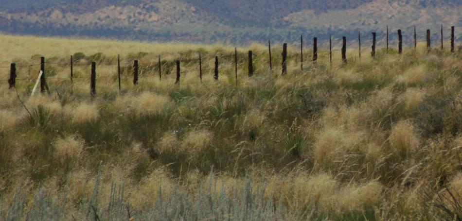 Fence posts among wild grass, north of Page, Arizona