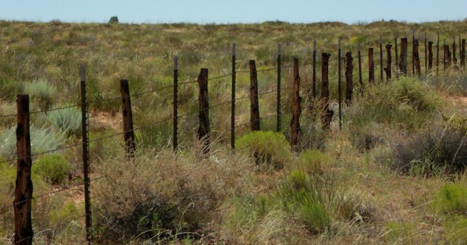 Fence posts south of Kanab, Utah