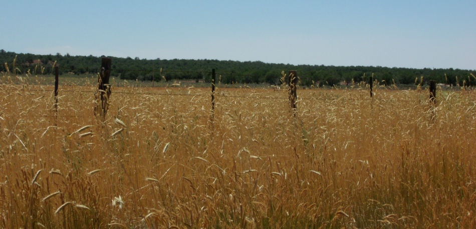 Wild grasses and fence posts