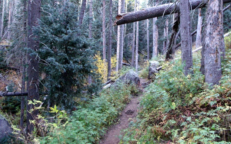 Arizona forest trail leading to Humphreys Peak
