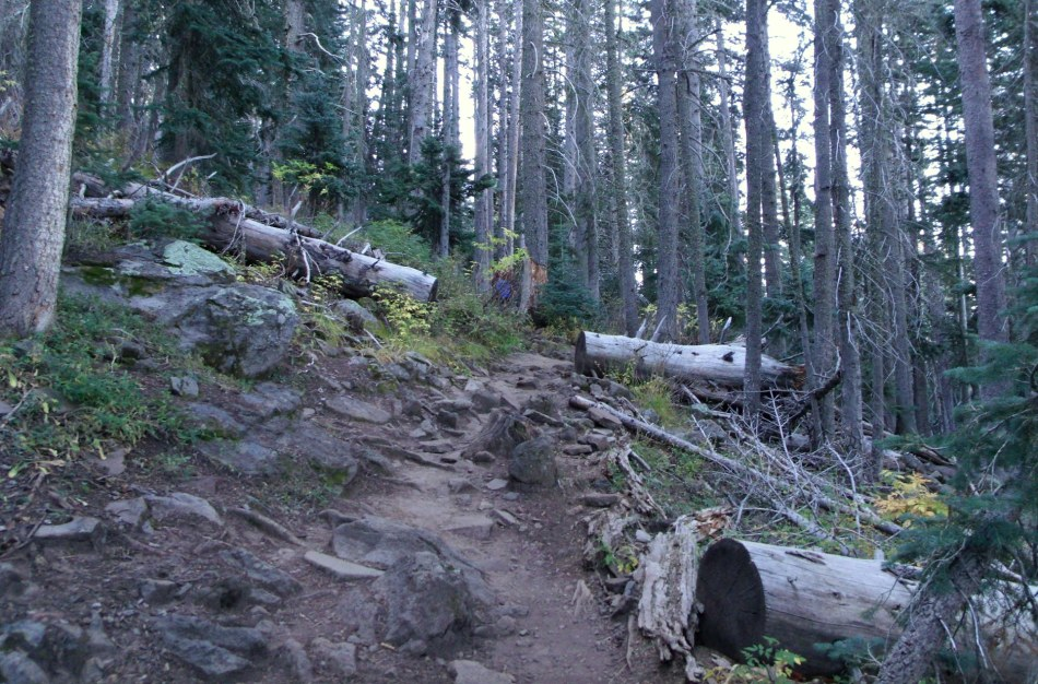 Trail to Humphreys Peak, first of many people