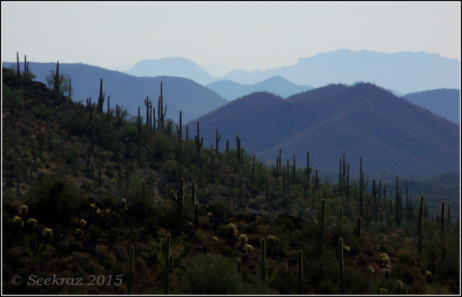 Hillside Saguaros with waves of mountains