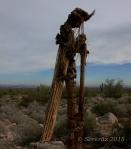Another Saguaro zombie at White TankMountains