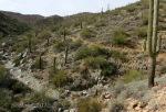Desert green along Goat Camp Trail in White TankMountains