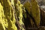 Enchanted canyon – desertlichen
