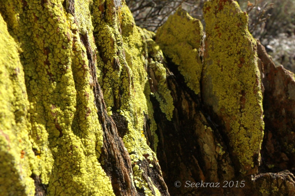 Enchanted canyon - desert lichen