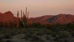 Glow of sunrise on Saguaro Cacti at White TankMountains
