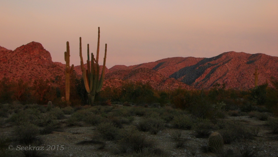 Glow of sunrise on Saguaro Cacti at White Tank Mountains