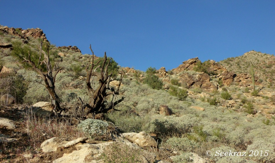 Hillside boulders in Ford Canyon of White Tank Mountains