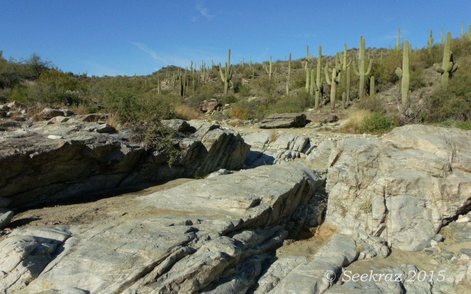 Saguaro crested waterway in White Tank Mountains