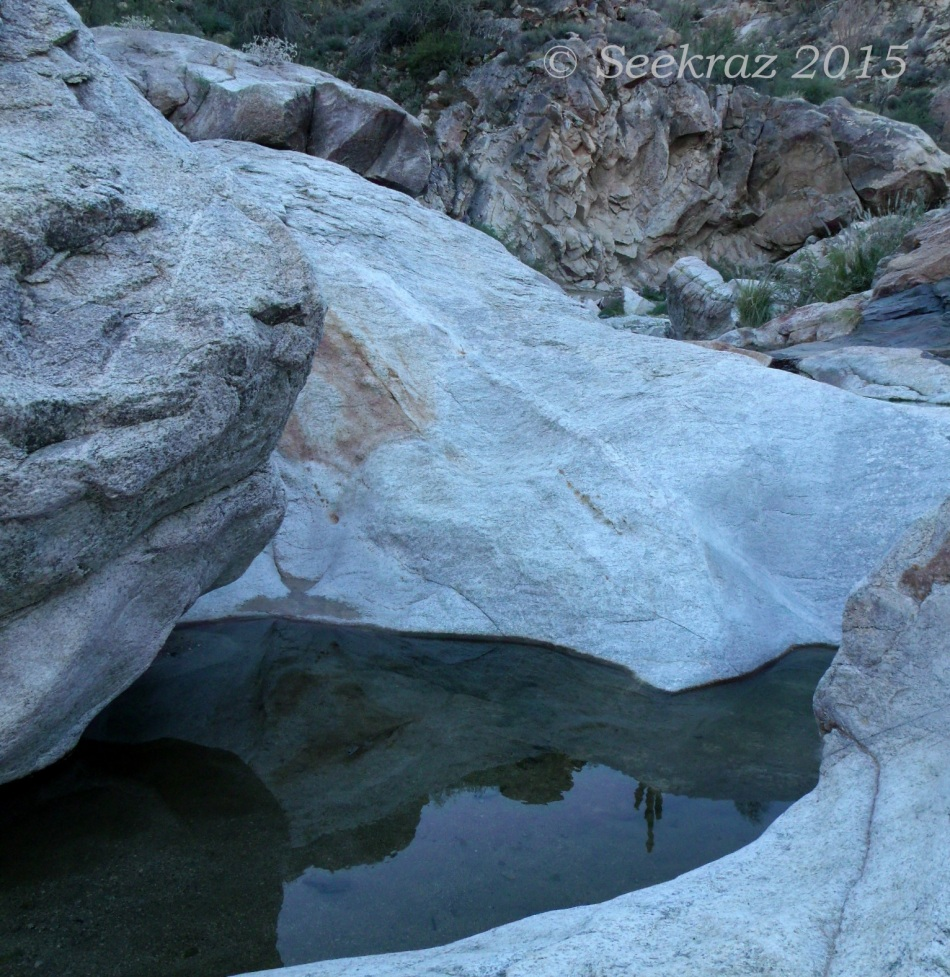 Saguaro reflection in pooled water in White Tank Mountains
