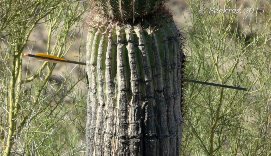 Trailside treasure of arrow through Saguaro in White Tank Mountains
